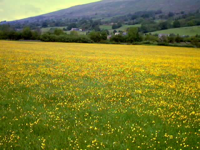 A Dentdale Meadow